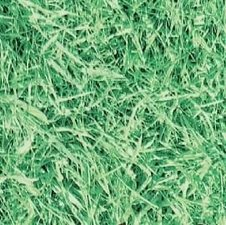 Plakfolie gras